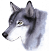 Arctic Wolves Avatar